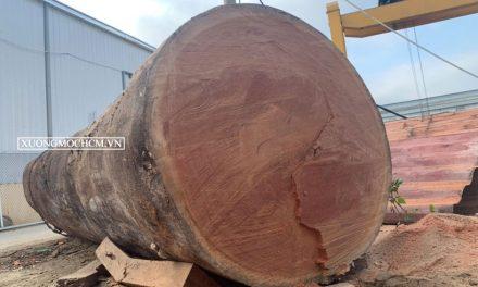 Gỗ sến là gỗ gì thuộc nhóm mấy