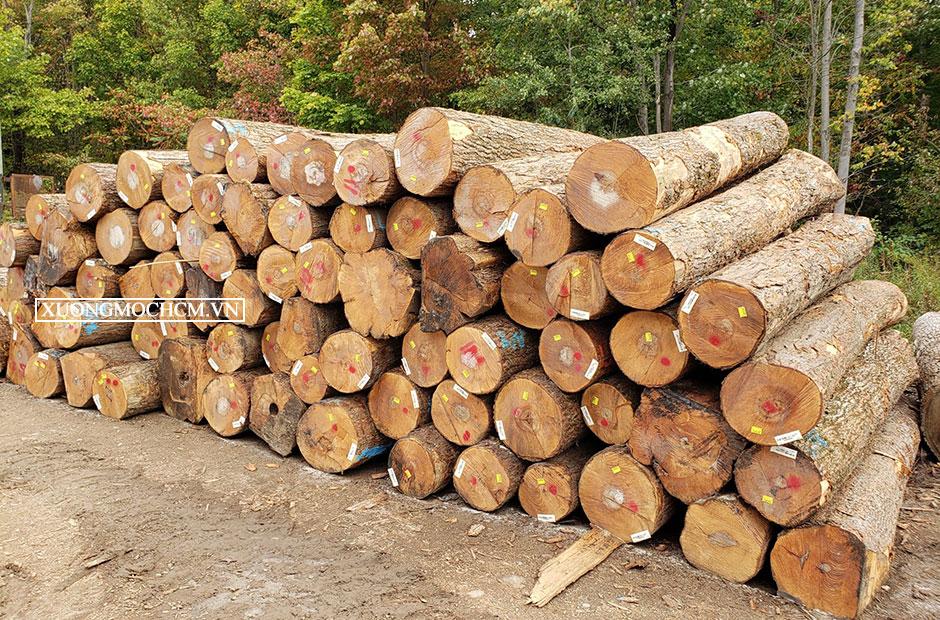 Tìm hiểu về gỗ Maple – Gỗ Thích